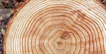 Stump Grinding 101